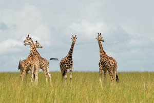 How to Globe Trot, travel, Africa, adventure, Lynnwood, WA